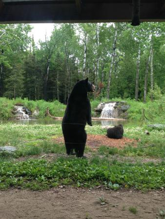 Ely, MN: Standing Bear