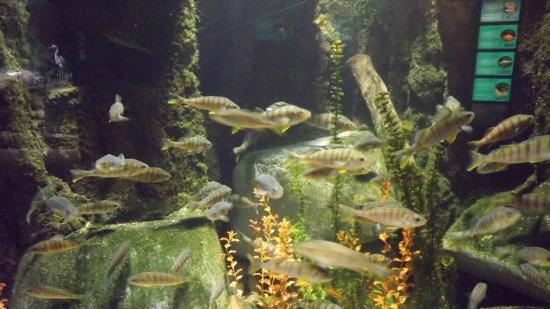 Sea Life no Olympia Park - Picture of SEA LIFE Munich, Munich ...