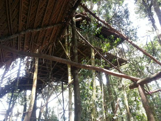 terras tree house house no 6