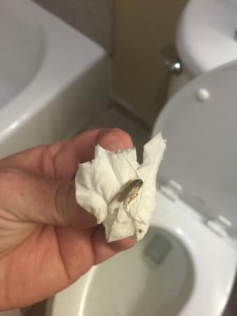 Candlewood Suites Galveston: Ones of the many roaches at the hotel we had to kill