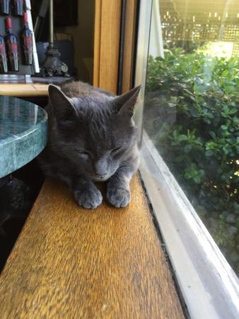 Armida Winery: Penny the cat
