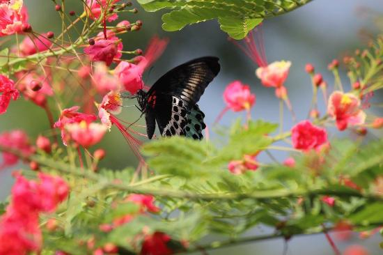 Old Kent Estates, Coorg: Early morning sipping nectar