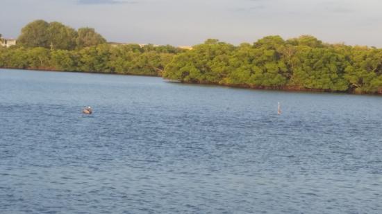 Turtle Bay Condos Foto
