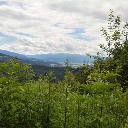 Wipfelwanderweg: A view from the walkway