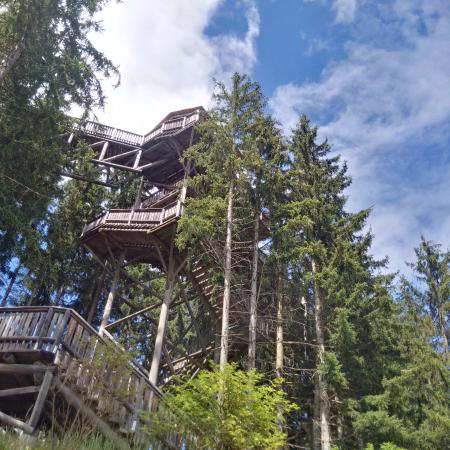 Wipfelwanderweg: Part of the climb into the treetops