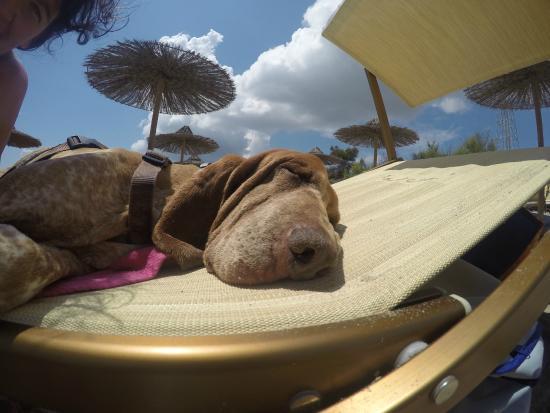 Pascià Glam Beach: Gylda