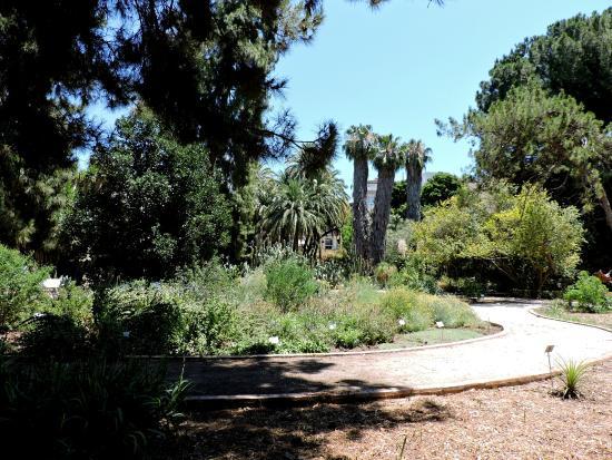 Picture of jardin botanico valencia tripadvisor - Jardin botanico valencia ...