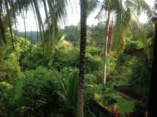 Bucu View Bungalows : View from the window