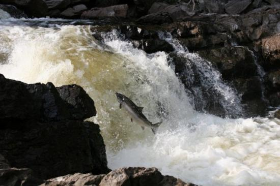 Causapscal, Canada: Site des chutes et Marais