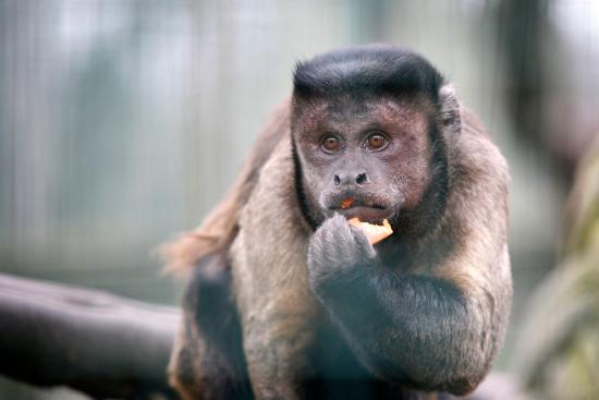 Amazona Zoo: Lots of Money Busiess!