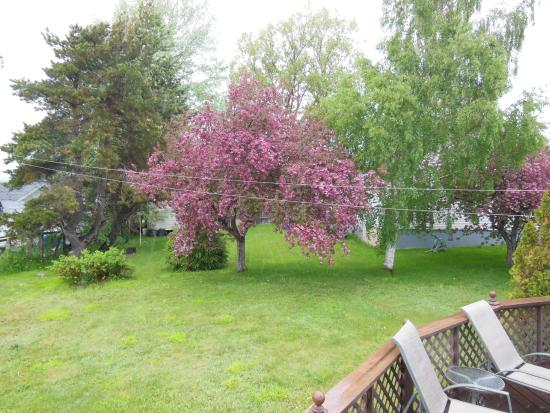 Lakeview Bed and Breakfast : Apple blossoms, middle of June