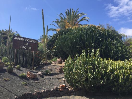 flamingos - Picture of Oasis Park Fuerteventura, Fuerteventura - TripAdvisor
