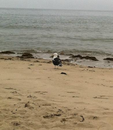South Cape Beach State Park: South Cape Beach