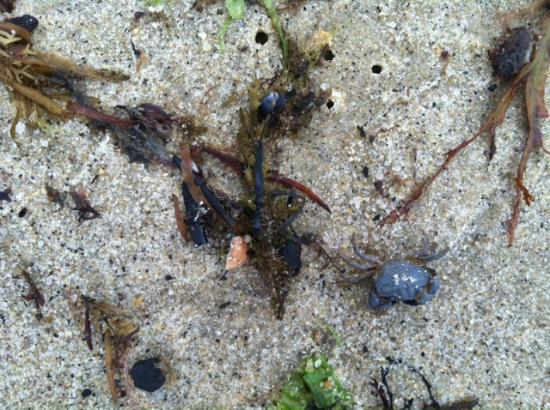 South Cape Beach State Park: Close up of sea life that has washed ashore