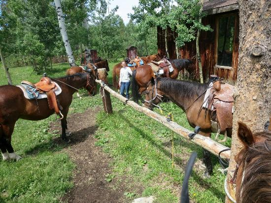 Homeplace Ranch : Home Place Ranch