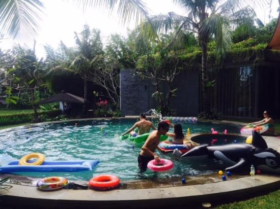 Toraja Villa: The pool.