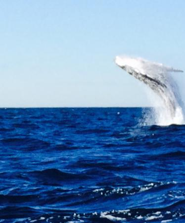 Manly Ocean Adventures: Taken on iphone but check out their website fir more.