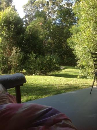 Milton Country Cottages : View from the daybed. I had a great nap here today!