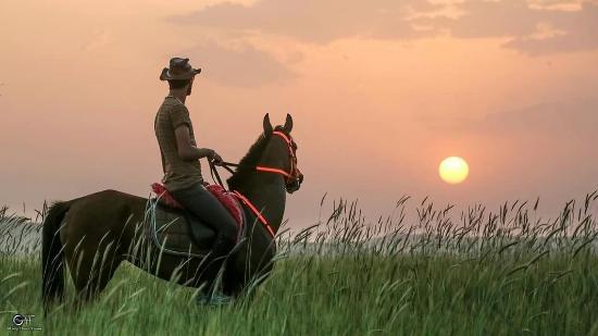 The Dalton Brothers Ranch: Dalton Brothers Çiftliği