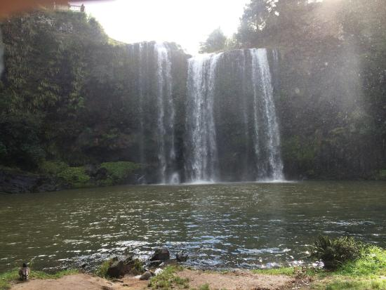 Whangarei, Nya Zeeland: We used one and half hours return way from the AH Reed park car park to the whangerei fall  to s