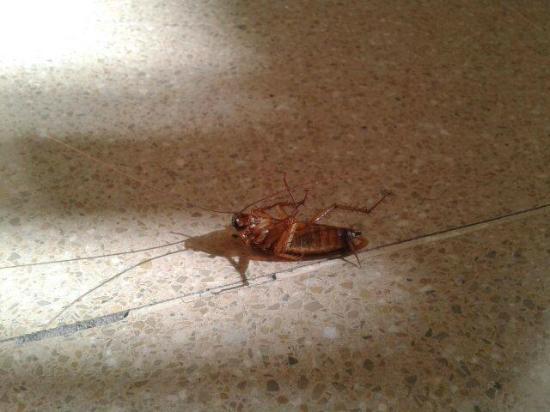 Residencia Campus Confort San Carlos: Cucarachas en la habitación