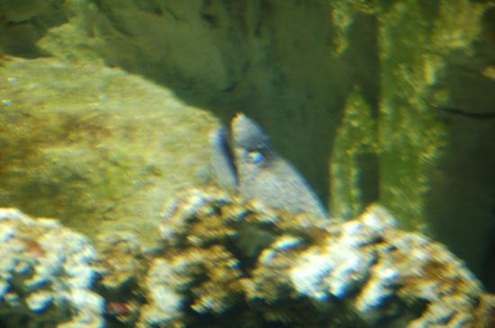 Pesci acquario foto di acquario di livorno livorno for Pesci acquario