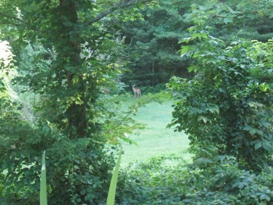 Peaceful Quest Retreats: View from the porch