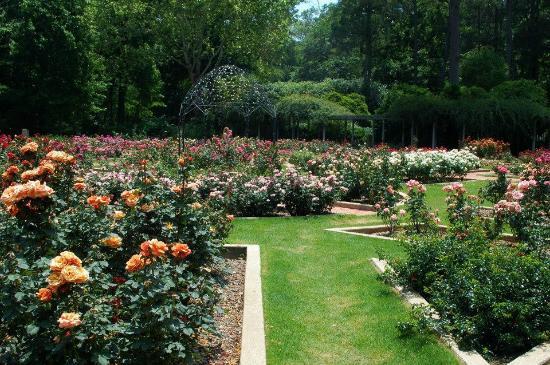 Rose garden - Picture of Birmingham Botanical Gardens, Birmingham ...
