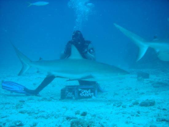 Simpson Bay, St. Maarten-St. Martin: Dive Safaris are the best dive operator in the Caribbean.