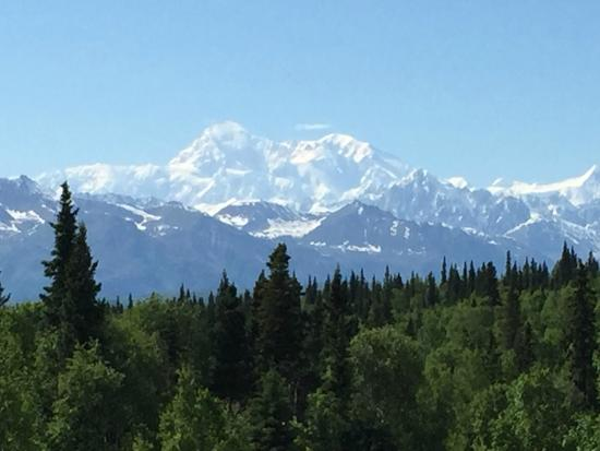 Talkeetna Treetop Chalet: The View.