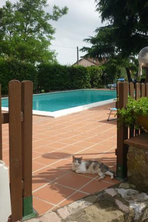 Il Querceto: piscina