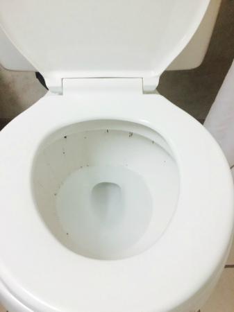 Red Roof Inn Carlisle: dirty toilet
