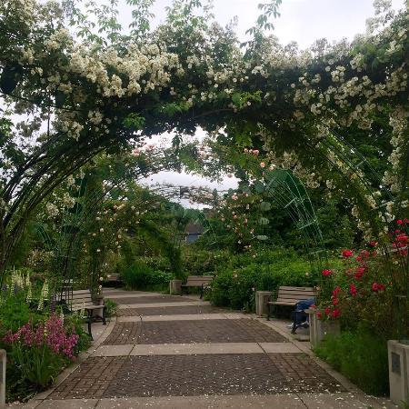 Eugene, Oregón: Rose park