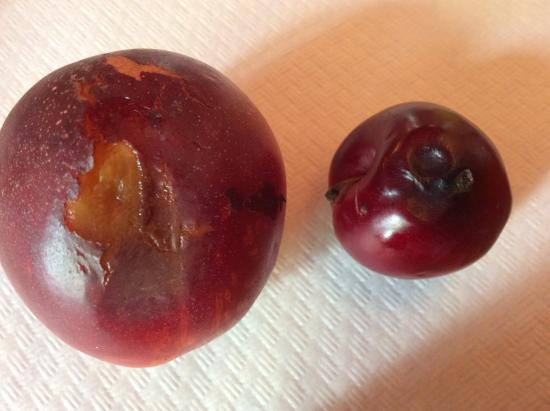 Hotel Nassa Garni: Rotting fruits served at breakfast
