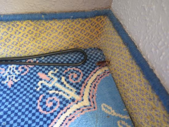 Hotel Beatriz Toledo Auditorium & Spa: Cucaracha incluida en habitación