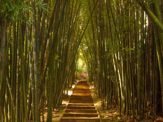Mullumbimby, Australia: The Bamboo walk