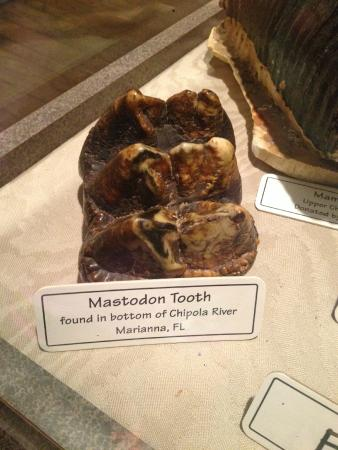 Cook's Natural Science Museum : fossils