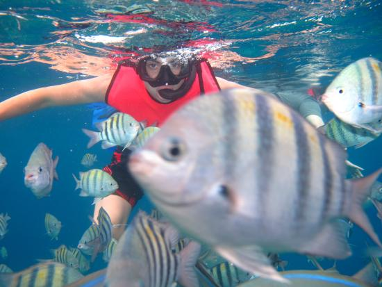FE Catamaran Sail and Snorkel Cozumel: Teenage Son