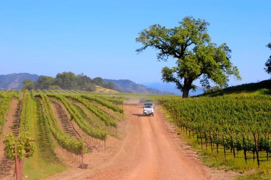 Sonoma County, CA: Vineyard Tour