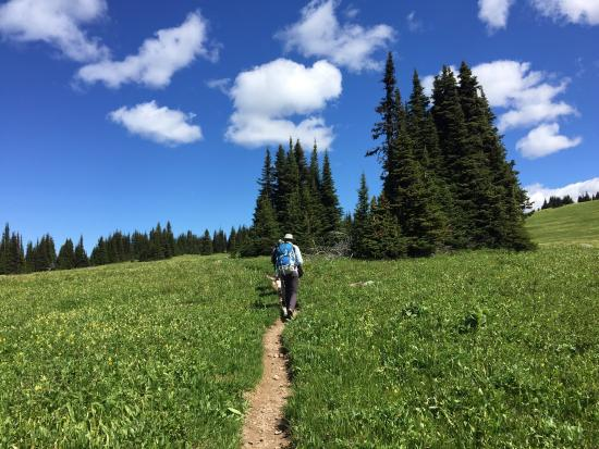 Discover Wells Gray: Hike up Trophy Mountain