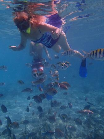 Webb - Picture of St.Thomas Scuba and Snorkel Adventures ...
