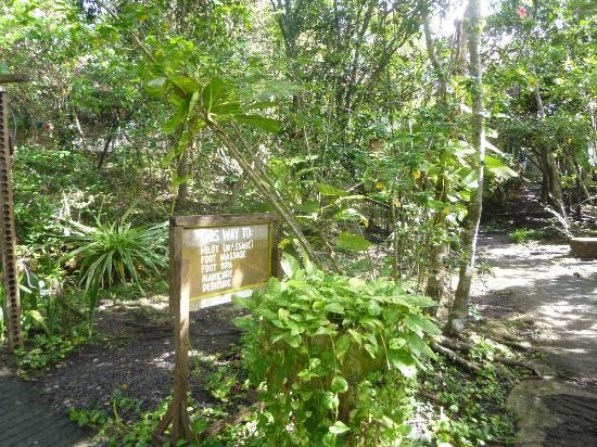 Bohol Bee Farm: Grounds