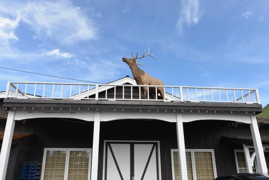 Virginian Lodge: 屋根に!