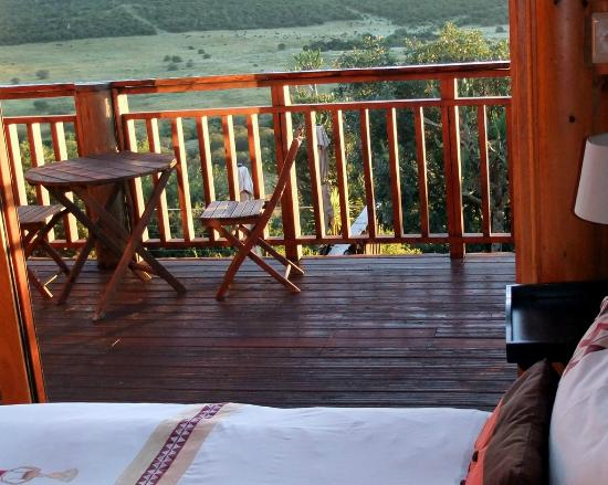 Addo Afrique Estate: View from the Serenity suite with well over 100 Buffalo in the background in the bordering Addo
