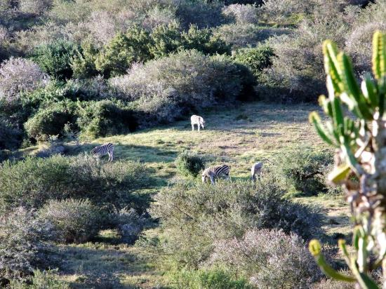 Addo Afrique Estate: Views from the Giraffe Lodge at Addo Afrique.