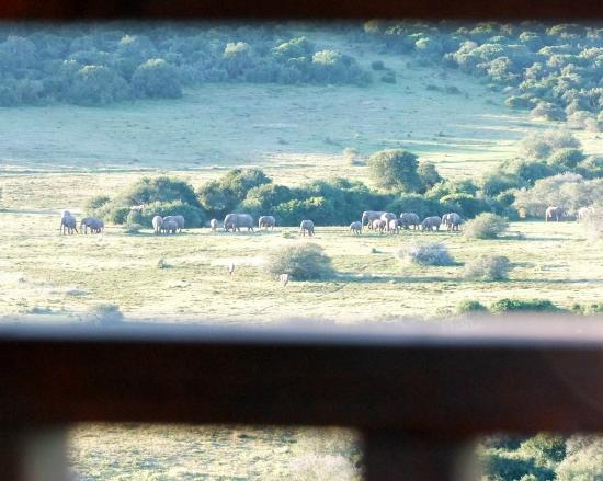 View from bed in the Tranquillity and Serenity suite's of the Giraffe Lodge at Addo Afrique