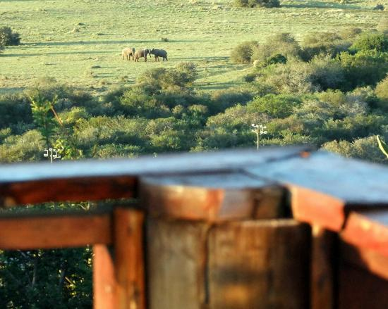 View from the Tranquillity and Serenity suite's of Elephant playing across the road in the Addo