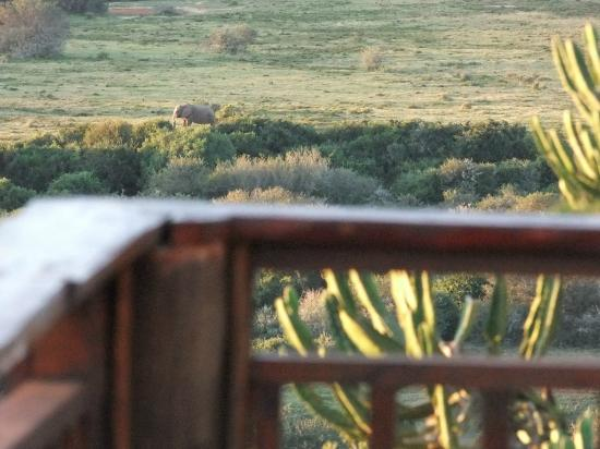 Addo, Afrika Selatan: View from the outside shower of the Tranquillity (Honeymoon) suite of the Giraffe Lodge.