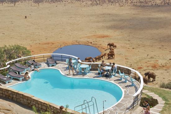 Voi Safari Lodge: Outdoor Swimming pool