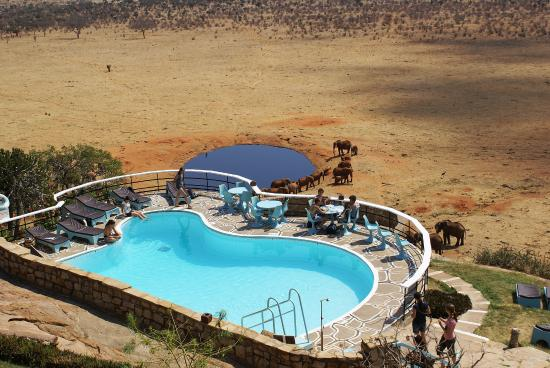 Voi safari Lodge swimming pool